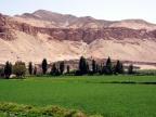 Wyraźny kontrast pomiędzy zieloną doliną zasobną w wodę a szarymi, pozbawionymi roślinności górami w rejonie Arequipy