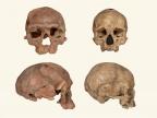 Porównanie czaszki z Jebel Irhoud (z lewej) i współczesnego człowieka (z prawej). Credit: NHM London