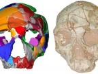 Rekonstrukcja czaszki Apidima 2 z typowymi cechami Neandertalczyka. Źródło: Uniwersytet w Tybindze