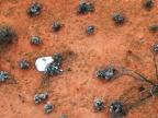 widok z helikoptera kapsuły leżącej na australijskim pustkowiu. Źródło: JAXA