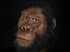 Rekonstrukcja twarzy przedstawiciela gatunku Australopithecus anamensis, znalezionego w Etiopii. Wykonana dla Cleveland Museum of Natural History (Matt Crow/Cleveland Museum of Natural History) (CMNH/MattCrow/Matt Crow/Cleveland Museum of Natural History)