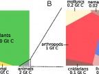 Graficzne przedstawienie globalnej dystrybucji biomasy. Grafika z artykułu źródłowego