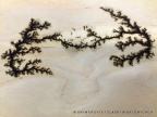Figury Lichtenberga wypalone w drewnie. Fot. Uniwersytet Śląski