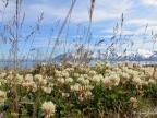 Krajobraz z Półwyspu Trolli (północna Islandia). Fot. Ewa Przedpełska-Wąsowicz