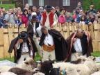 Mieszanie owiec – Koszarzyska Republika Czeska. Fot. Grzegorz Studnicki
