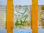 Kapsuła z mikroorganizmami, jajami pająków, siewkami jęczmienia i rzodkiewnika oraz próbkami tworzyw   fot. Konrad Halastra