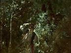 """Obraz Witolda Pruszkowskiego """"Kwiat paproci (W noc świątojańską)"""" (1875) (Foto: wikipedia.org)"""