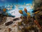 """Rekonstrukcja dewońskiej rafy koralowej, fragment wystawy pn. """"Dewon – złoty wiek fauny i flory 370 mln lat temu"""" w Muzeum Wydziału Nauk o Ziemi UŚ Fot. Anna Dąbrowska"""