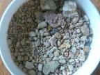 Szczątki szkarłupni (liliowców, rozgwiazd i wężowideł) jurajskich. Średnica naczynia wynosi 5 cm. Fot. Rafał Lach