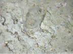 Szklanka stoją na dnie Nankai Trough, na głębokości ok. 600 metrów. Źródło: Deep-sea Debris Database.