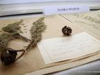 Obecnie kolekcja Zielnika Naukowego liczy ponad 130 000 okazów. Fot. Małgorzata Kłoskowicz
