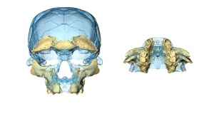 Rekonstrukcja twarzy na podstawie szczątek odnalezionych w Jebel Irhoud. Credit: Hublin/Ben-Ncer/Bailey/et al./Nature