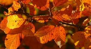 Jesień. Fot. Pixabay
