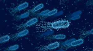 źródło: domena publiczna - Pixabay.com. Uwaga - przedstawiona na obrazie bakteria nie należy do gatunku Bacillus subtilis i nie jest to badana bakteria