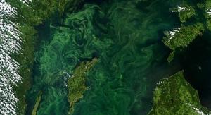 Zdjęcie satelitarne bałtyckiej martwej strefy wykonane w 2005 roku. Źródło: https://deadzonesjw.weebly.com/baltic-sea.html