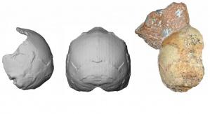 Rekonstrukcja czaszki Apidima 1 sprzed 210 tysięcy lat - cechy Homo sapiens mieszają się z archaicznymi cechami rodzaju Homo. Źródło: Uniwersytet w Tybindze
