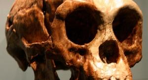 Czaszka Homo floresiensis z Amerykańskiego Muzeum Historii Naturalnej. Fot. By Ryan Somma (originally posted to Flickr as Flores) [CC BY-SA 2.0 (http://creativecommons.org/licenses/by-sa/2.0)], via Wikimedia Commons