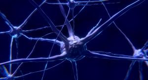 Czy funkcja, którą spełniały połączenia nerwowe zerwane przez chorobę Alzheimera może być zrealizowana przez inne, jeśli odpowiednio przeorientujemy działania chorej osoby? Foto: domena publiczna (Pixabay.com)