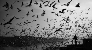 Chmara ptaków nad morzem - mewy