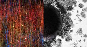 Topologia w neuronaukach. Obraz usiłuje przedstawić nieprzedstawialne. Po lewej - cyfrowe odwzorowanie kory nowej. Po prawej - struktury o różnych kształtach i wymiarach, oznaczające wymiary od 1D do 7D. Credit: Blue Brain Project.