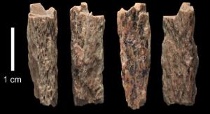 Fragmenty kości długiej 13-letniej dziewczyny sprzed 50 tysięcy lat. Foto: Max Planck Institute