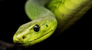 zielony wąż patrzący z bliska w oko kamery