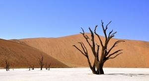 Światowy Dzień Walki z Pustynnieniem i Suszą. Fot. Pixabay