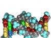 Molekuły DNA. Fot. Yikrazuul [Public domain], via Wikimedia Commons