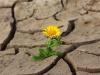 Bądźmy ostrożni, gdy rozmawiamy o zmianach klimatu. Fot. pixabay