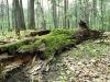 """Powierzchnia badawcza na terenie rezerwatu """"Las Murckowski"""" (Foto: P. Skubała)"""