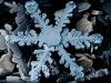 Płatek śniegu widziany pod mikroskopem elektronowym. Fot. domena publiczna