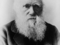 Charles Darwin Fot. Elliott & Fry - Library of Congress