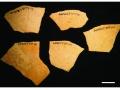 Skorupy strusich jaj oznaczone jako eksponaty muzealne
