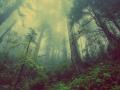 Rośliny stanowią ponad 80 procent ziemskiej biomasy. Źródło: domena publiczna - pixabay.com