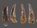 Szczątki kraba kieszeńca znalezione w jaskini Figueira Brava. Foto: Mariana Nabais © João Zilhão