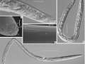 Image Source: Doklady Biological Sciences