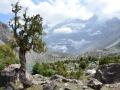 Drzewa w Górach Zerawszańskich (Tadżykistan). Fot. Magdalena Opała-Owczarek