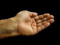 Zdjęcie przedstawia lewą dłoń