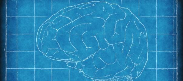 Ludzki mózg rozwija się do ok. 25. roku życia, ale mistrzostwo w niektórych sprawach osiąga znacznie później. Foto: domena publiczna